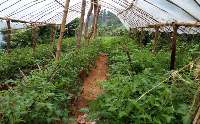 सल्यानका कृषकहरू बेमौसमी तरकारी खेती तर्फ आकर्षित बन्दै