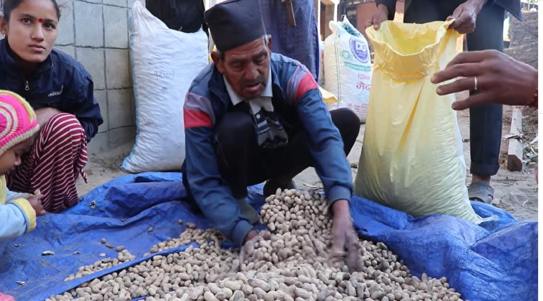 सल्यानमा झन्डै एक करोडको बदाम उत्पादन
